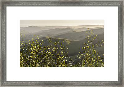 Framed Print featuring the photograph California Wildflowers by Steven Sparks