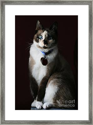 Calista Framed Print by Judy Whitton