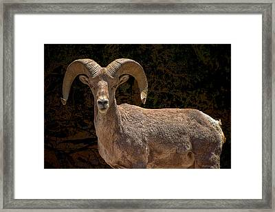 Call Me Dude Framed Print by Britt Runyon