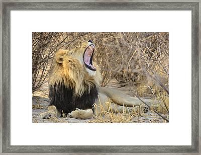 Call Of The Kalahari Framed Print by Andy-Kim Moeller