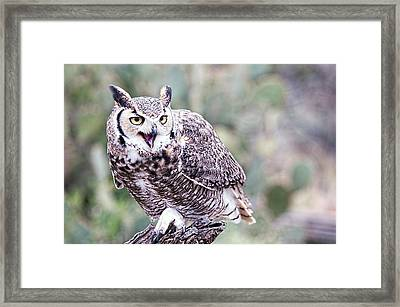 Framed Print featuring the photograph Call Of The Owl by Dan McManus