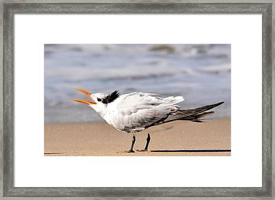 Call Of The Tern Framed Print by Fraida Gutovich