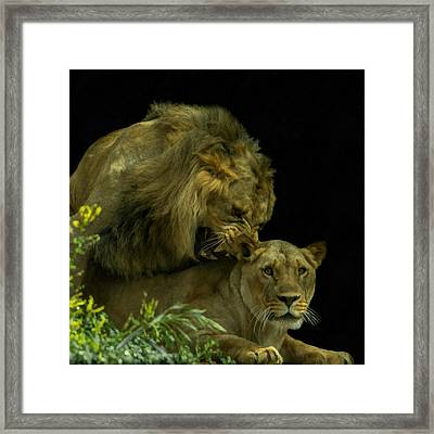 Call Of The Wild 2 Framed Print by Ernie Echols