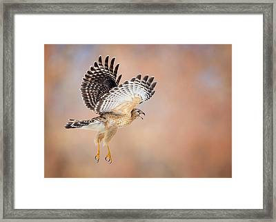 Call Of The Wild Framed Print by Bill Wakeley