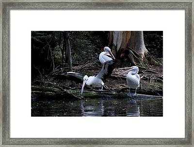 Call That A Take Off Framed Print by Graham Palmer