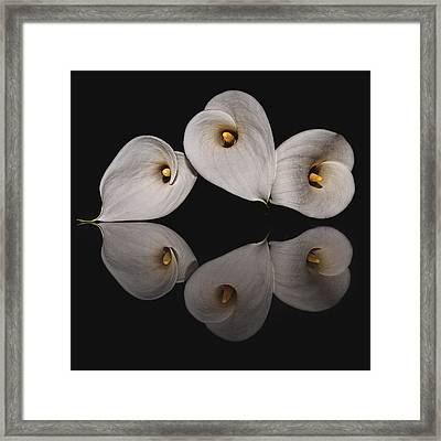 Calla Circle D4423 Framed Print by Wes and Dotty Weber