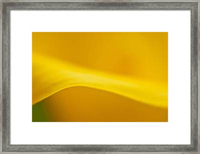 Calla Curve Framed Print by Joan Herwig