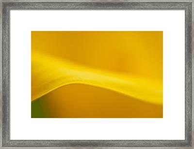 Calla Curve Framed Print