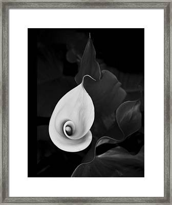 Framed Print featuring the photograph Calla Curves by Art Shimamura