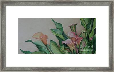 Calla Lilies Framed Print by Charlotte Yealey