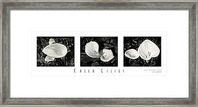 Calla Lilies Horizontal With Title And Nameplate Framed Print