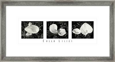 Calla Lilies Horizontal With Title Framed Print