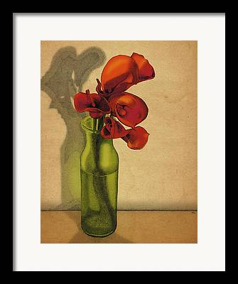 Calla Lilly Framed Prints