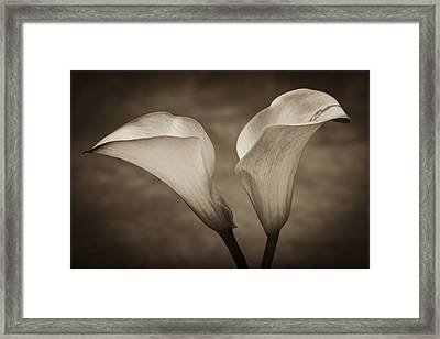 Calla Lilies In Sepia Framed Print by Sebastian Musial