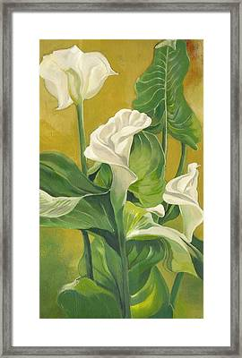 Calla Lilies Painting Framed Print by Alfred Ng