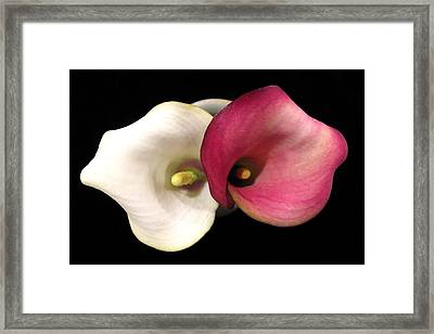 Framed Print featuring the photograph Calla Lilies by Patricia Januszkiewicz