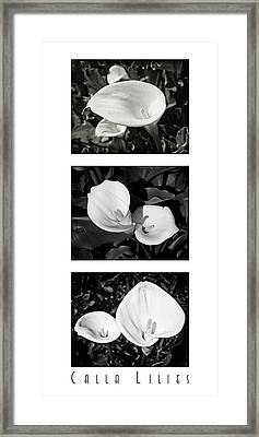 Calla Lilies Vertical With Title Framed Print