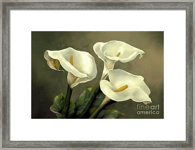Calla Lillies Framed Print by Jan Gibson