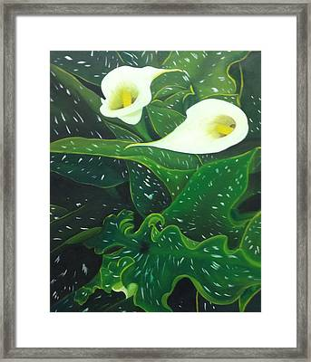 Calla Lilly - A New Beginning Framed Print by Tammy Powell