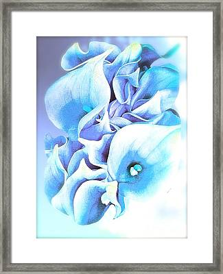 Calla Lilly So Soft Lilac And Blue Framed Print by Saundra Myles