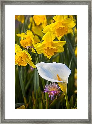 Calla Lily And Doffodils Framed Print by Garry Gay
