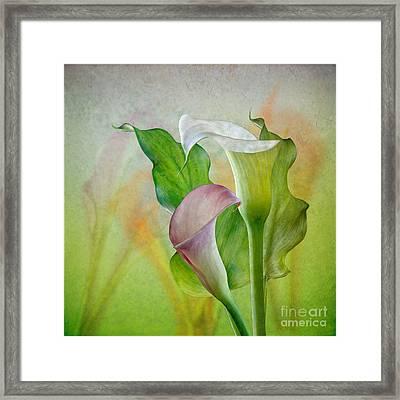 Calla Lily Garden Framed Print
