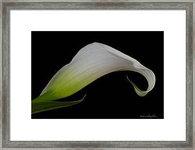 Calla Lily I Framed Print by Kathy Ponce