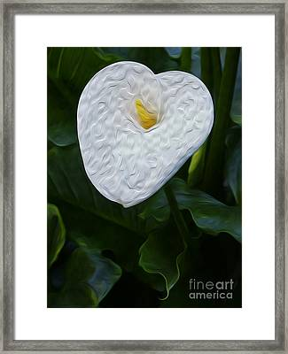 Calla Lily I Framed Print