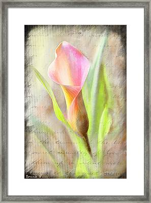 Calla Lily In Pink Framed Print
