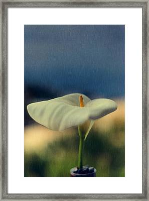 Calla Lily Framed Print by Marco Oliveira