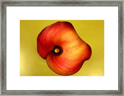Framed Print featuring the photograph Calla Lily by Patricia Januszkiewicz