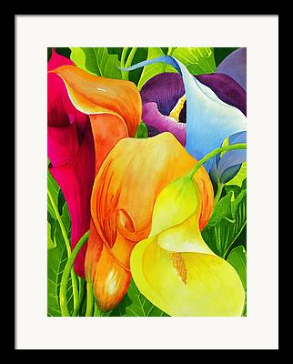 Calla Lilly Paintings Framed Prints