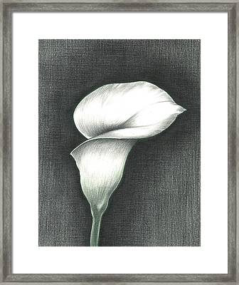 Calla Lily Framed Print by Troy Levesque