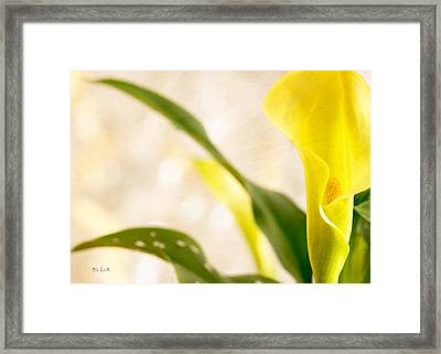 Calla Lily Two Framed Print