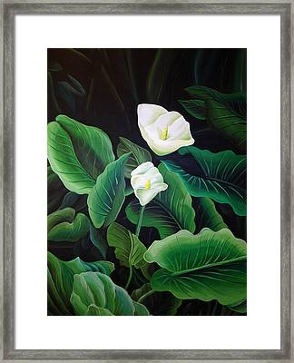 Calla Lily Framed Print by William Love