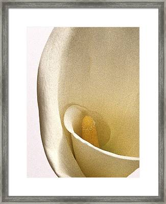 Calla Lily X Framed Print