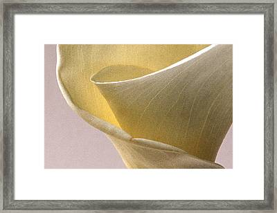 Calla Lily Xii Framed Print