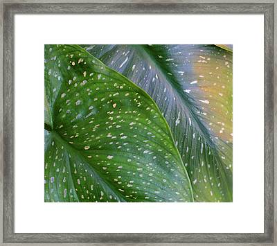 Calla Spotted Leaf Abstract Framed Print