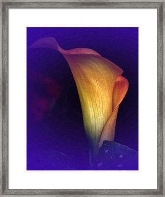 Calla Study No. 3 Framed Print