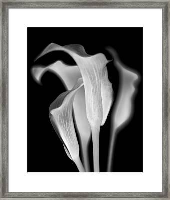 Callas Framed Print by Jaromir Hron