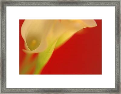 Framed Print featuring the digital art Callas On Red by Bruce Rolff