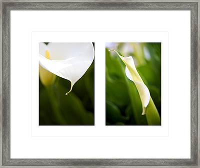 Calla's Side By Side Framed Print by Brooke Roby