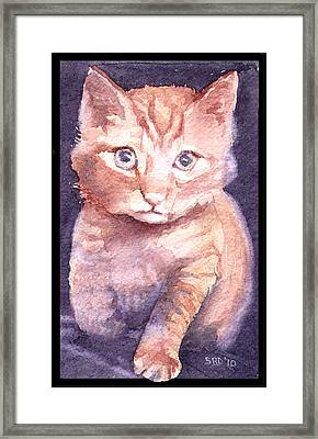 Callie's Cats Framed Print by Sarah Buell  Dowling