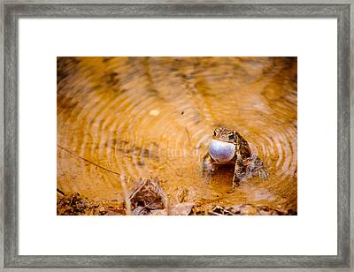 Framed Print featuring the photograph Calling All Frogs by Courtney Webster