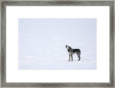 Calling Home Framed Print by Deby Dixon