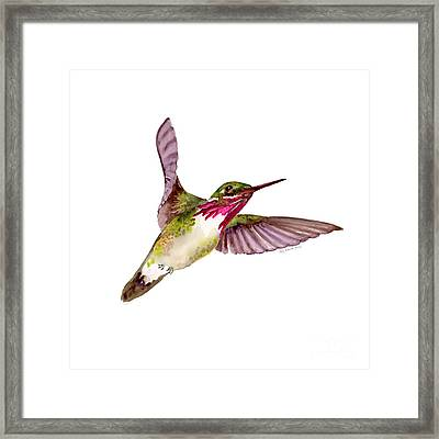 Calliope Hummingbird Framed Print by Amy Kirkpatrick