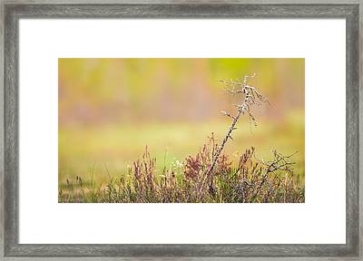 Calm Framed Print by Janne Mankinen