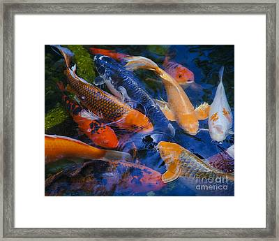 Calm Koi Fish Framed Print by Jerry Cowart