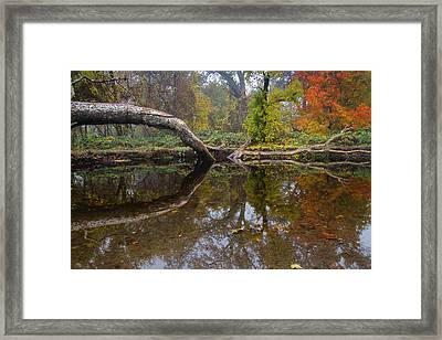 Calm On Big Chico Creek Framed Print