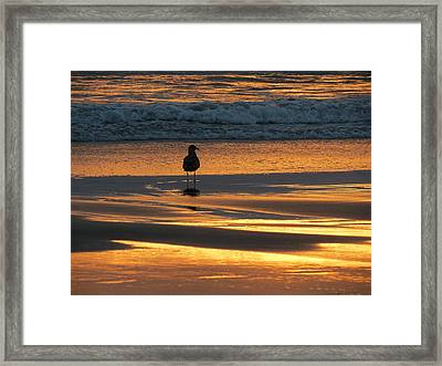 Framed Print featuring the photograph Calm by Ramona Johnston